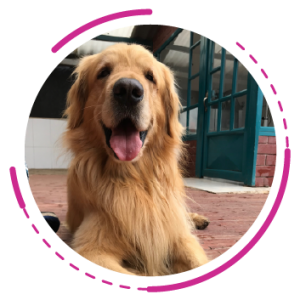 Etologia y adiestramiento canino