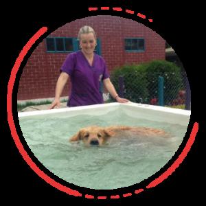 Hidroterapia y rehabilitación canina