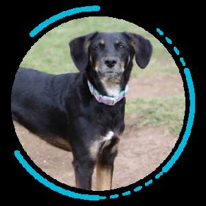 Aromaterapia en perros