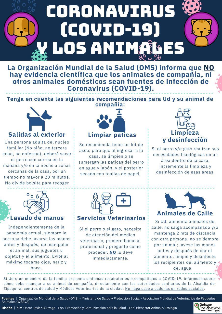 coronavirus y los animales